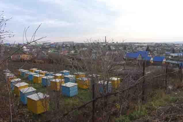 paseki-na-ogorode-davlekanovo Пчеловодство в Башкирии Башкирия Народознание и этнография