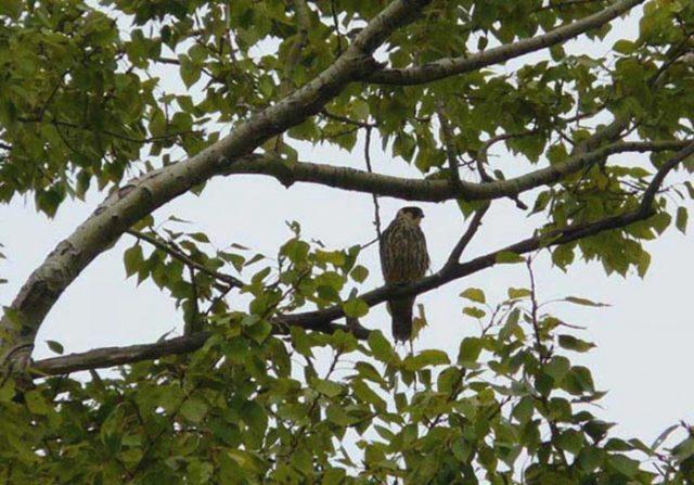 636253141 Птицы в городе Башкирия Люди, факты, мнения