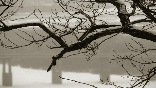 0-125622 Бамбуччо-Бо о том, как растут деревья Бамбуччо-Бо Блог писателя Сергея Синенко