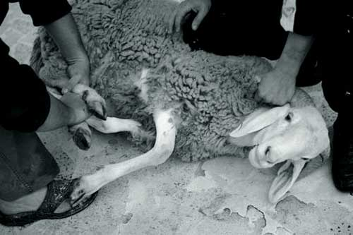 43124325252 Набережные Челны отказались от ритуального забоя животных в центре города Ислам в России Татарстан