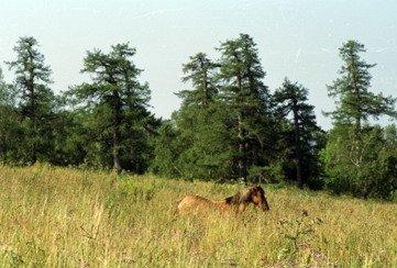 altin-solok Село Верхние Киги на северо-востоке Башкирии Башкирия Посреди РУ