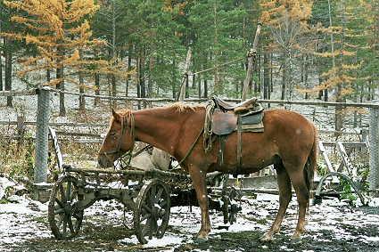 loshad-zapryazhennaya Коневодство в Башкирии Башкирия Посреди РУ Экономика и финансы