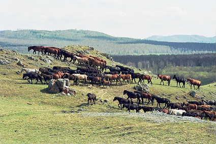 na-gorah Коневодство в Башкирии Башкирия Посреди РУ Экономика и финансы