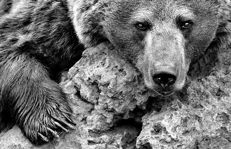 35236534 Не смотри в глаза медведю из Казани Люди, факты, мнения Татарстан