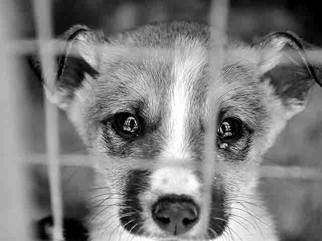 645747 Концлагерь для животных в Нижнем Новгороде Люди, факты, мнения Нижегородская область
