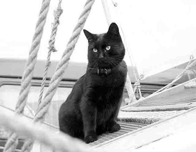 788 Животные на корабле Защита Отечества