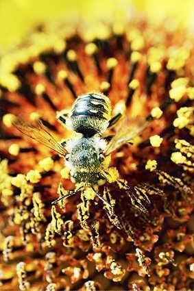 -V-zheltom Пчеловодство в Башкирии Башкирия Народознание и этнография