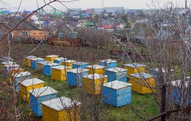 SH105502_2 Пчеловодство в Башкирии Башкирия Народознание и этнография