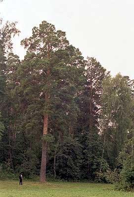 sosnovit-bor-bakali Удмурты в Башкирии Башкирия Народознание и этнография Удмуртия