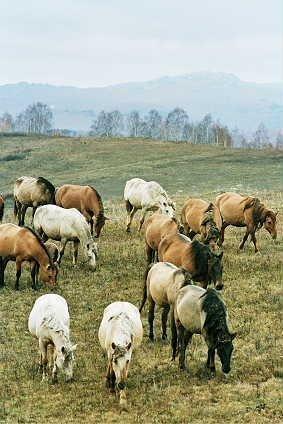 doyniy-gurt-na-fone-uraltau Лесные башкиры Башкирия Народознание и этнография