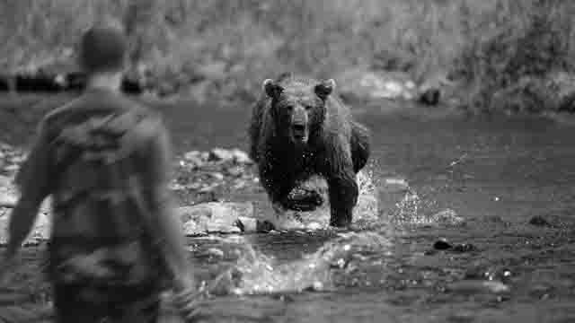 medved-napal-na-cheloveka Марий Эл: нападение медведей Люди, факты, мнения Марий Эл