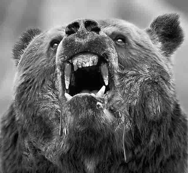 medved Марий Эл: нападение медведей Люди, факты, мнения Марий Эл