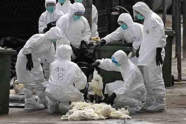 bioterrorizm-biologicheskaja-bezopasnost Биотерроризм и биологическая безопасность Антитеррор